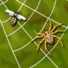Xonix - Spider Web