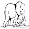 Coloring Elephants -2 online game