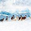 eight below hidden numbers online game