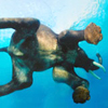 Elephant Swimming online game