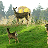 Family of Deer Jigsaw Puzzle online game