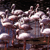 Flamingo Jigsaw online game