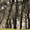 Foggy Forest Jigsaw Puzzle online game