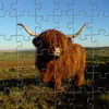 Highland Cow Jigsaw online game