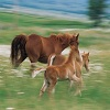 Horse Family Jigsaw Puzzle online game