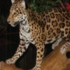 Leopards Jigsaw online game