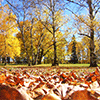 Crunchy Leaves Jigsaw Puzzle