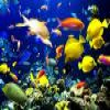 Puzzle Fishes – 1